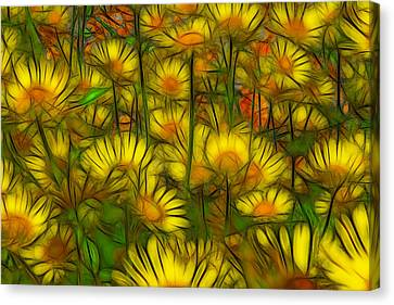 Daisies Canvas Print by Jean-Marc Lacombe