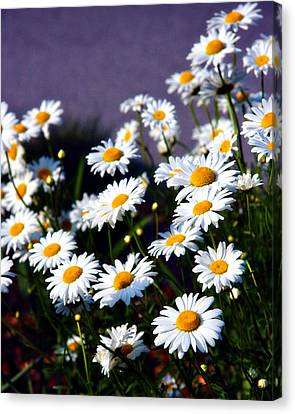 Daisies Canvas Print by Lana Trussell