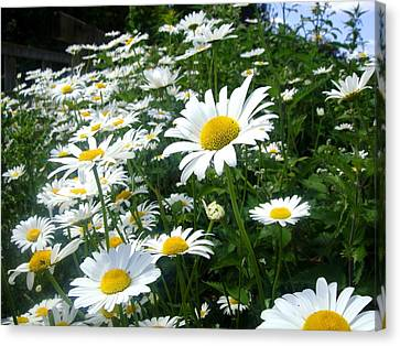 Flowers Canvas Print featuring the photograph Daisies by Roberto Alamino