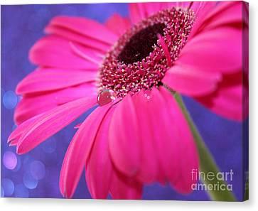 Daisy Fairy Canvas Print by Krissy Katsimbras