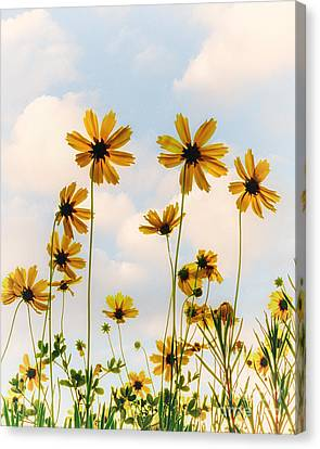 Dance Of The Coreopsis Canvas Print by Tamyra Ayles