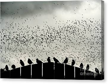 Dance Of The Migration Canvas Print by Jan Piller
