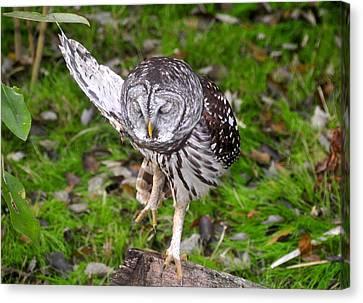 Dancing Owl Canvas Print by David Lee Thompson
