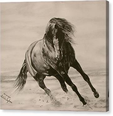 Running Horses Canvas Print featuring the drawing Dancing Pace by Melita Safran