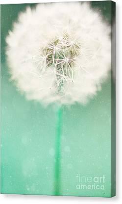 Dandelion Seed Canvas Print by Kim Fearheiley