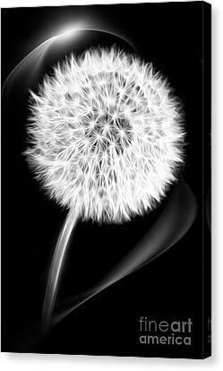 Dandelion Canvas Print by VIAINA Visual Artist