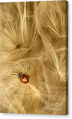 Dandelions Fairy Tales Iv Canvas Print by Iris Greenwell