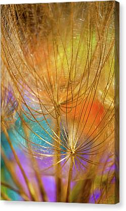 Dandelions In Spring Canvas Print by Iris Greenwell