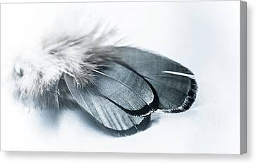 Dare To Fly Canvas Print by Maggie Terlecki