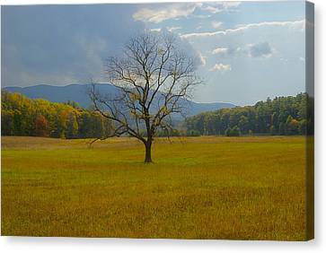 Dare To Stand Alone Canvas Print by Michael Peychich
