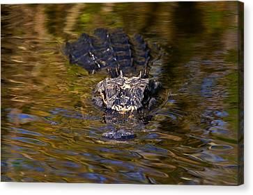 Dark Water Predator Canvas Print by Mike  Dawson