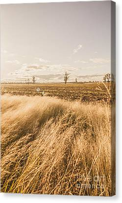 Darling Downs Rural Field Canvas Print by Jorgo Photography - Wall Art Gallery