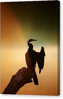 Darter Bird With Misty Sunrise Canvas Print by Johan Swanepoel
