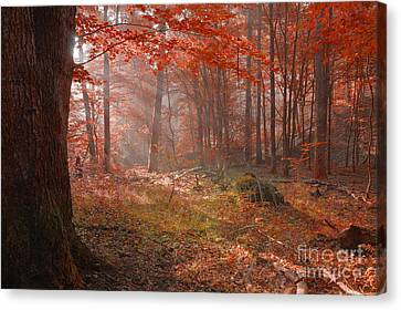 Dawn In An Old Forest Canvas Print by Jerzy Lekki