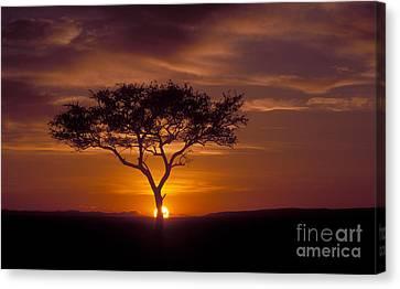 Dawn On The Masai Mara Canvas Print by Sandra Bronstein