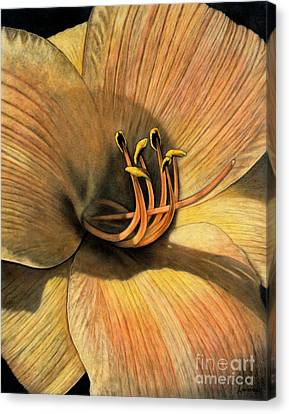 Day Lily Canvas Print by Lawrence Supino