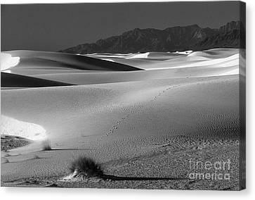 Daybreak At White Sands Canvas Print by Sandra Bronstein