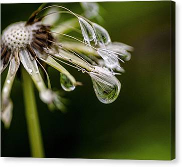 Daybreak Dew Drop  Canvas Print by KG Photography