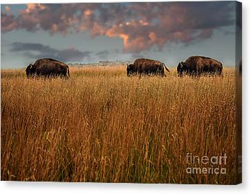 Days End Canvas Print by Tamyra Ayles