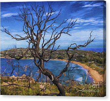 Dead Tree At Barrenjoey Headland Canvas Print by Avalon Fine Art Photography