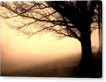 December Fog By The Sleepy Pin Oak Sepia Canvas Print by Thomas Woolworth
