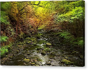 Deep In The Woods Canvas Print by Svetlana Sewell