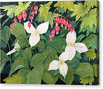 Deep Woods Trillium's Canvas Print by Mark W McLean
