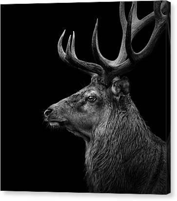 Deer In Black And White Canvas Print by Lukas Holas