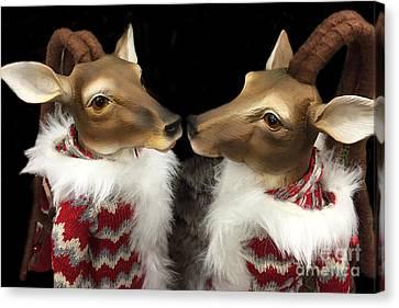 Deer Reindeer Kissing - Christmas Holiday Deer - Reindeer Deer Holiday Art Canvas Print by Kathy Fornal