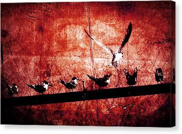 Defiance Canvas Print by Andrew Paranavitana