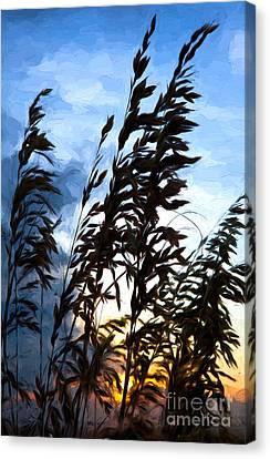 Delicate Dawn I Canvas Print by Dan Carmichael