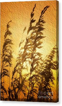Delicate Dawn II Canvas Print by Dan Carmichael