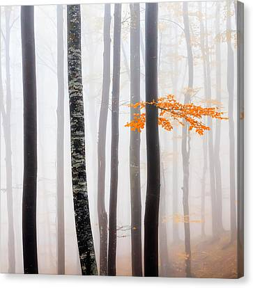 Delicate Forest Canvas Print by Evgeni Dinev