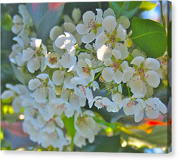 Delightfully White Canvas Print by Gwyn Newcombe