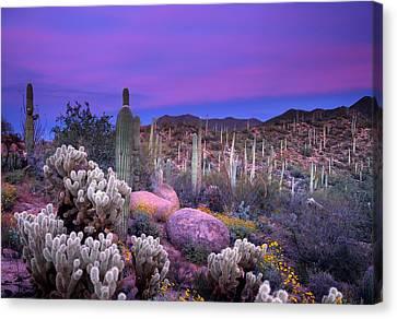 Desert Garden Canvas Print by Eric Foltz