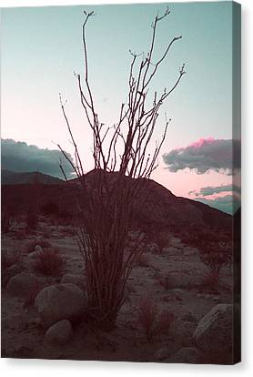 Desert Plant And Sunset Canvas Print by Naxart Studio