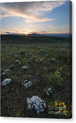 Desert Sunburst Canvas Print by Mike Dawson