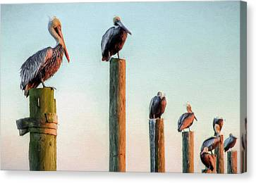 Destin Pelicans-the Peanut Gallery Canvas Print by JC Findley