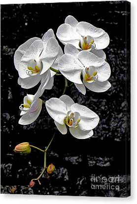 Dew-kissed Cascading Orchids Canvas Print by Sue Melvin