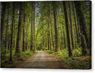 Dirt Road Through A Rain Forest On Vancouver Island Canvas Print by Randall Nyhof