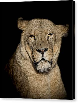 Displeasure Canvas Print by Paul Neville