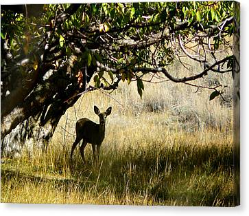 Doe In The Orchard Canvas Print by Lisa Knechtel