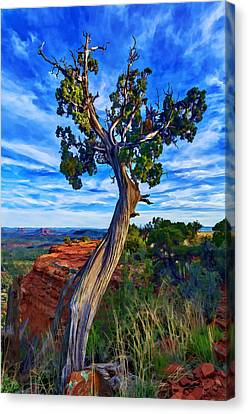 Doe Mountain Juniper Canvas Print by ABeautifulSky Photography