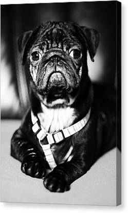 Dog Canvas Print by Falko Follert