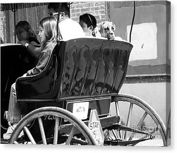 Dog On A Carriage Ride Canvas Print by Venus
