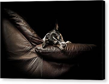 Dog Tired Canvas Print by Paul Neville