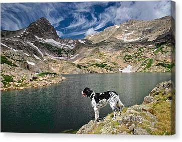 English Setter With A View Canvas Print by Flying Z Photography By Zayne Diamond