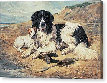 Dogs Watching Bathers Canvas Print by John Emms