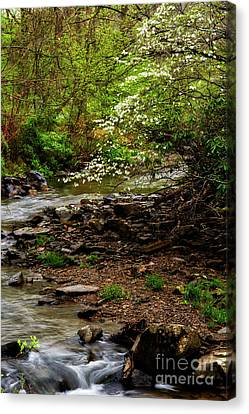 Dogwood At The Bend Canvas Print by Thomas R Fletcher
