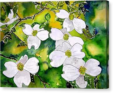 Dogwood Tree Flowers Canvas Print by Derek Mccrea